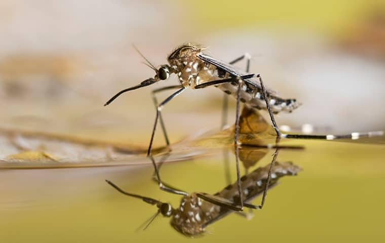 mosquito sitting on top of a body of water