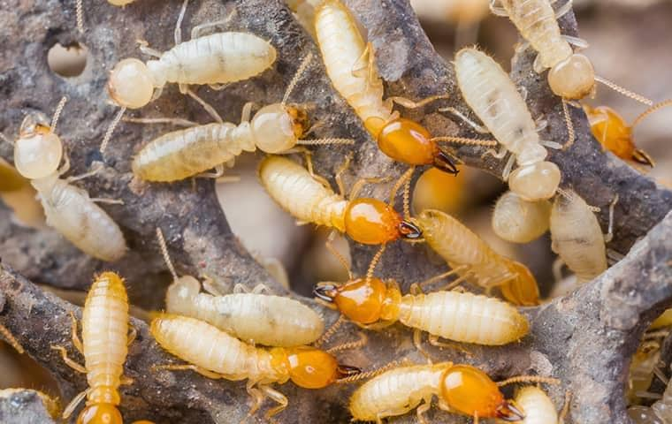 termites swarming in south florida