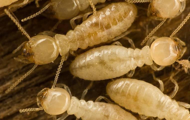 close up picture of termites