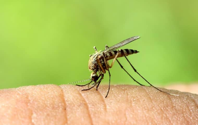 a mosquito biting a persons hand in florida