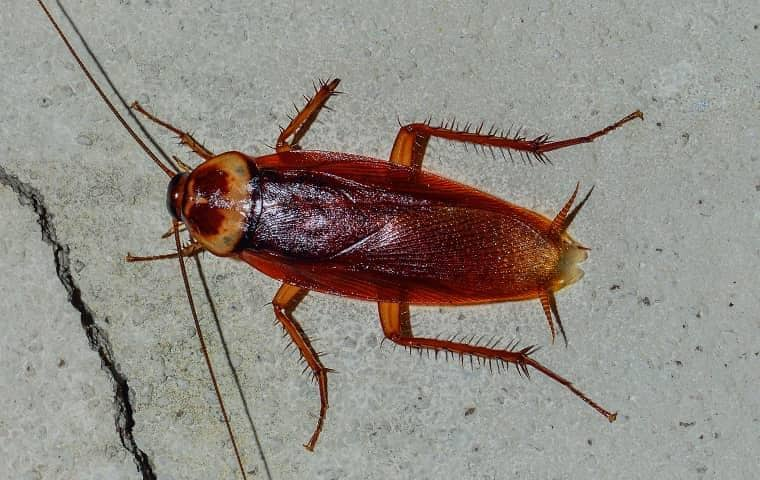 a cockroach outside a home in tequesta florida