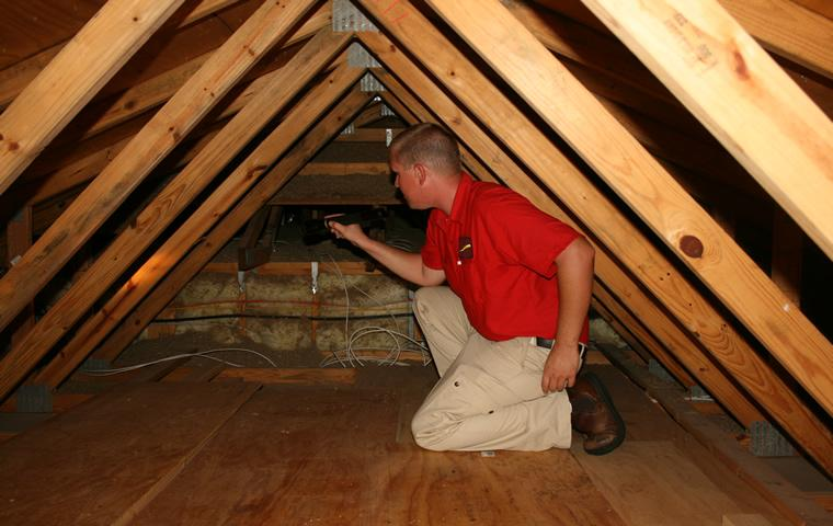 attic pest inspection of a home in jupiter florida