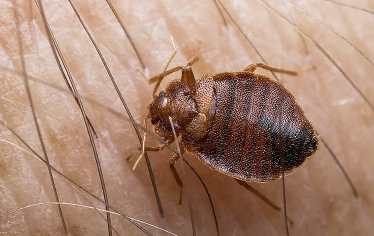 a bed bug crawling outside in pinkerton tennessee