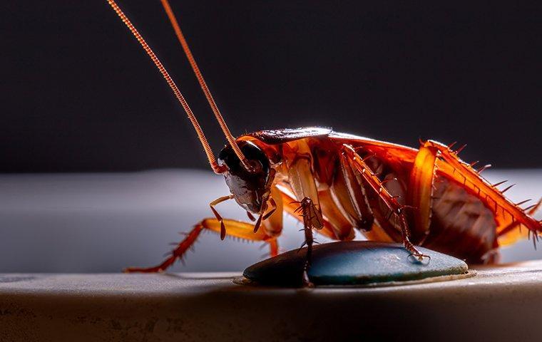 cockroach crawling on a basement floor