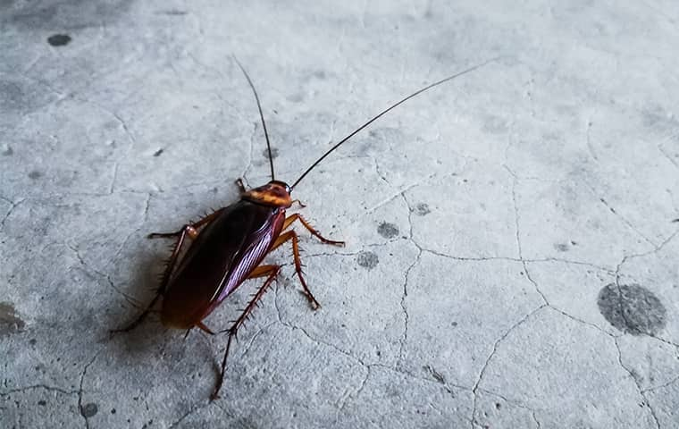 a cockroach crawling inside a home in richardson texas