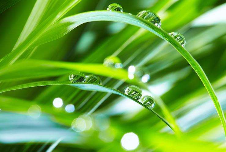 small dew drops balancing on long vibrant green blades of grass in a sapphire north carolina yard