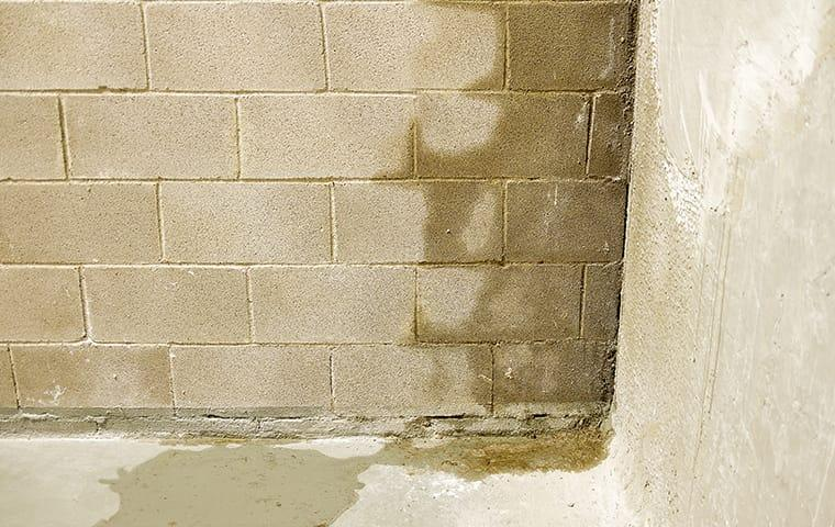 a close up of a cement stone basement wall showing signs of water damage from moisture during fall season