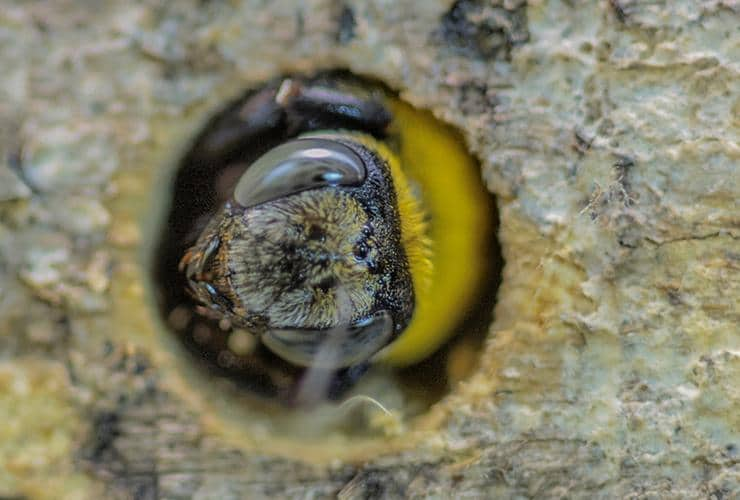 carpenter bee hole in greenville