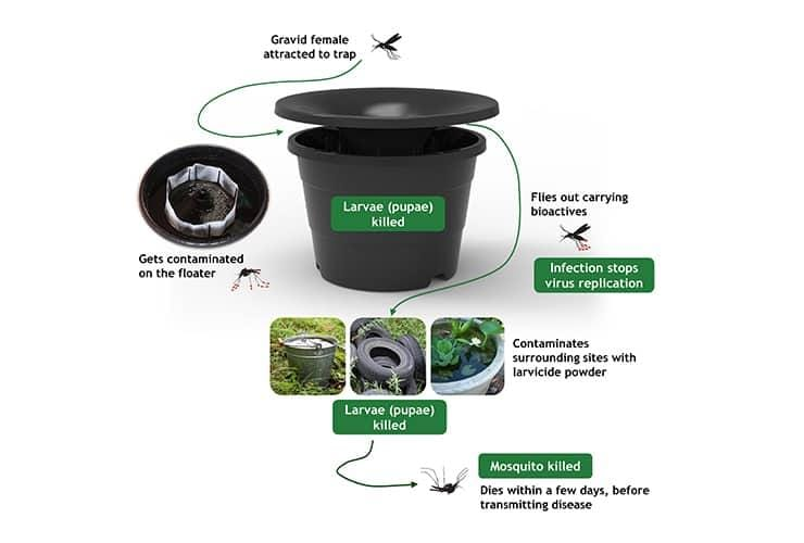 image showing how a mosquito trap works