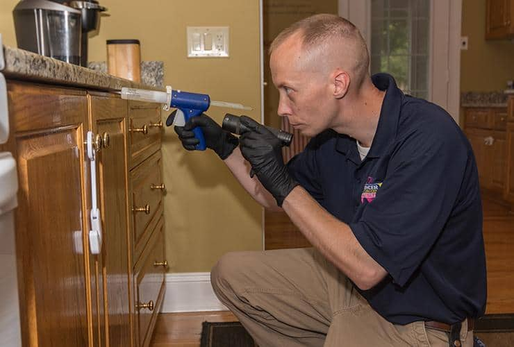interior pest control treatment