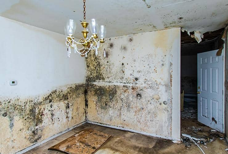 a living room with mildew covered walls in clinton south carolina