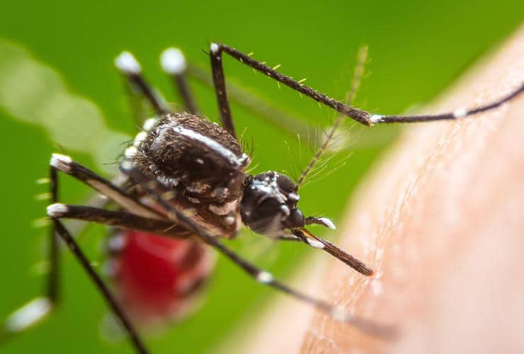 a mosquito biting a persons elbow in fountain inn south carolina