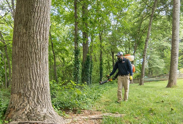Technician treating woods for pest