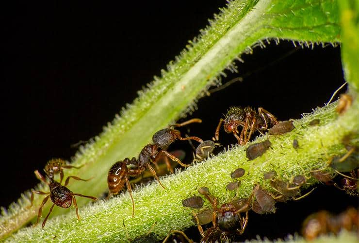 a group of pavement ants outside a home in liberty south carolina