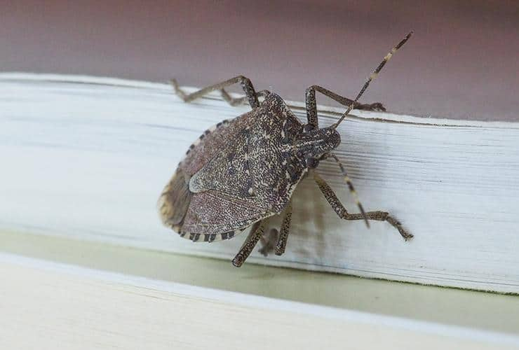 stink bug crawling on a book inside a greenville home