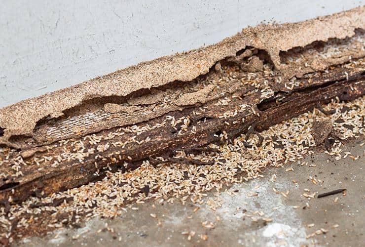 termite damage in a greenville sc home