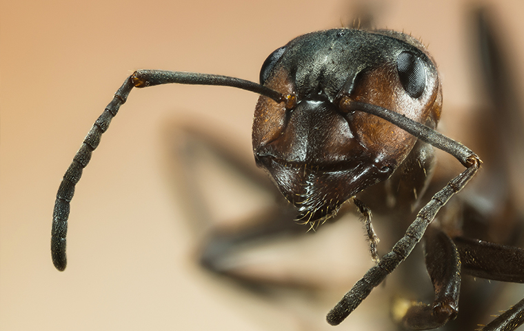 close up of an ant in a home in larue texas