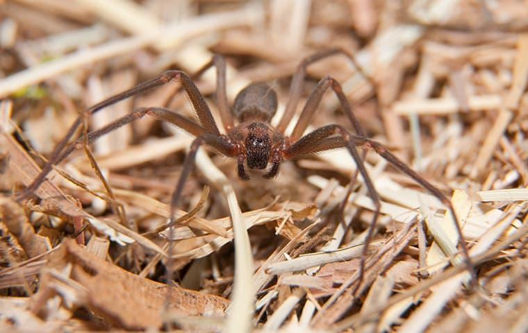 a large grey and brown spider crawling along  the floor of a texarkana home