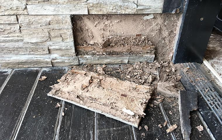 termite damage in longview