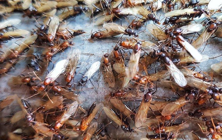 termite swarmer on a rock