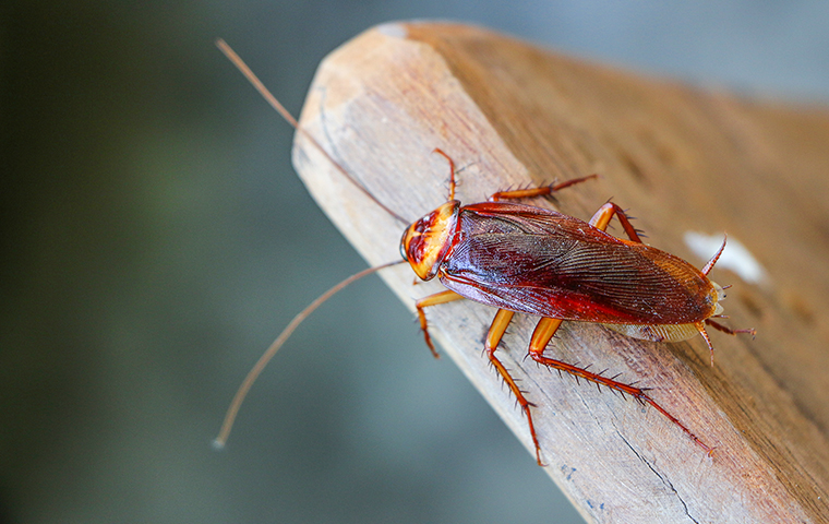 a cockroach outside of a home in palestine texas