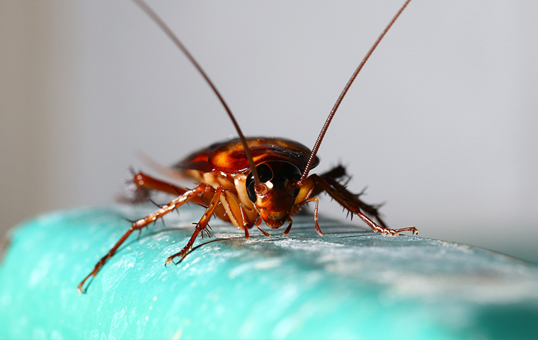 close up of a cockroach inside of a home in jefferson texas