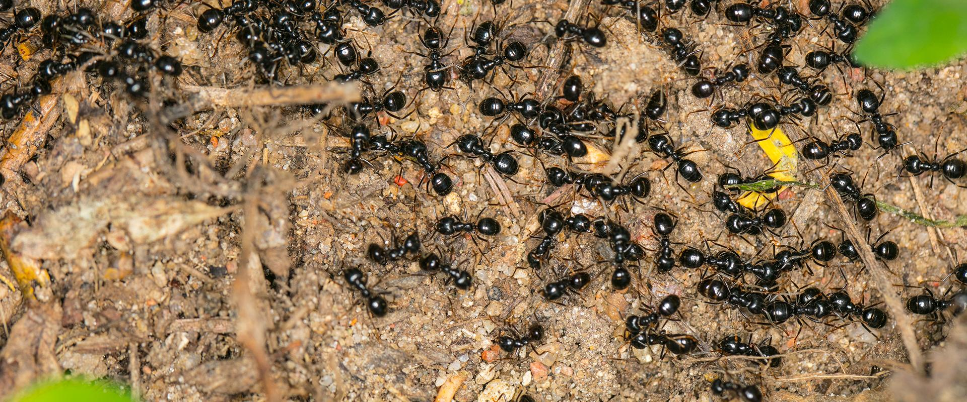 a large group of ants outside of a home in southwest arkansas