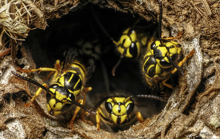 many wasps in a nest outside of a home in tyler texas
