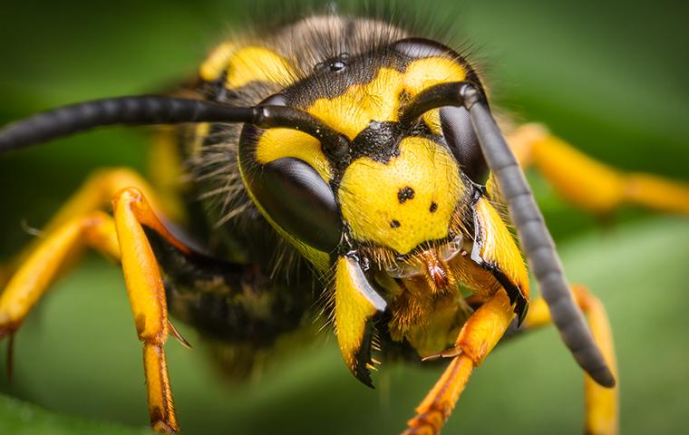 close up of a wasp