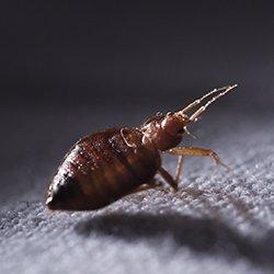 a bed bug crawling on sheets at night
