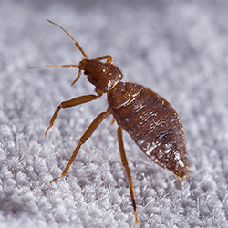 bed bug found in hartford home