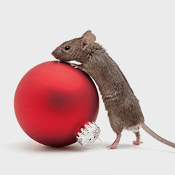 mouse with christmas ornament