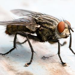 a deatiled image of a cluster fly up close in a hartford conneticut kitchen