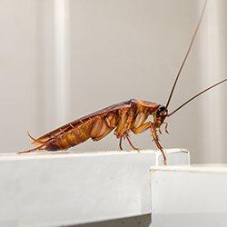 cockroach crawling in a bathroom