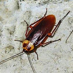 a cockroach on cement