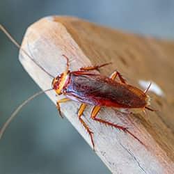 cockroach on a cutting board