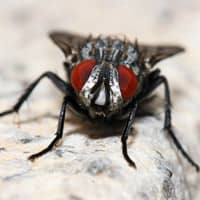 fly on countertop close up