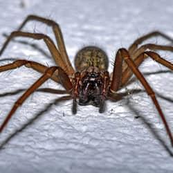 spider up close