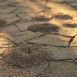 pavement ants on a driveway