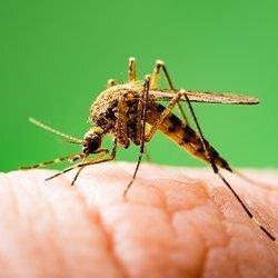 mosquito biting human hand