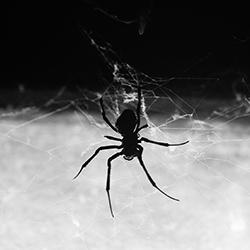 a house spider spinning its web in a springfield massachuseettes home