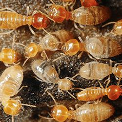 termites up close