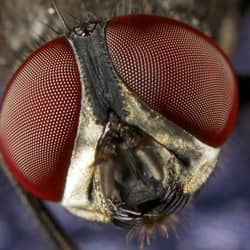 image of a cluster fly up close
