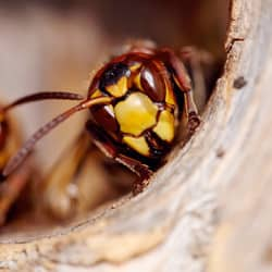 wasp nest up close