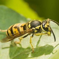 a yellow jacket outside on a plant