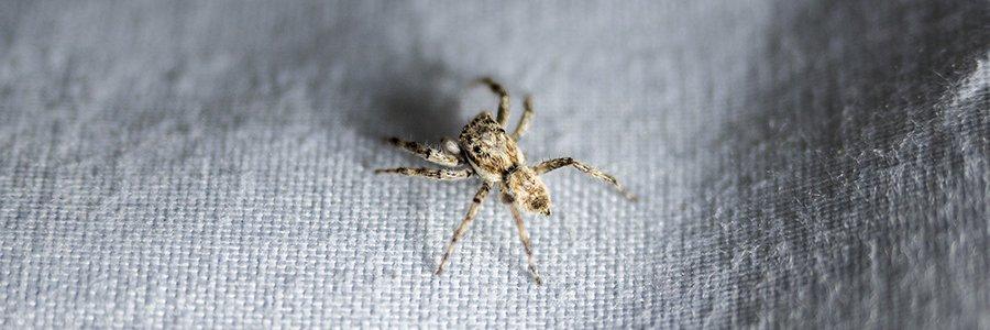 spider on rug