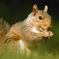 up close image of a squirrel