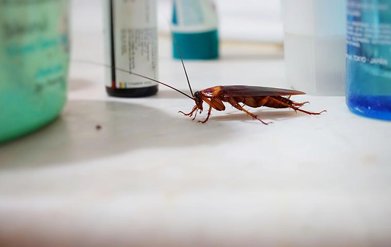 a cockroach crawling on a bathroom counter