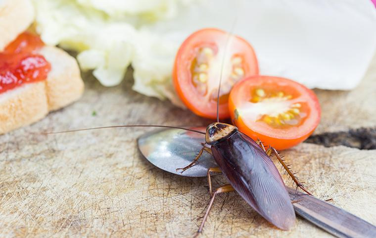 a cockroach crawling on a kitchen counter among food