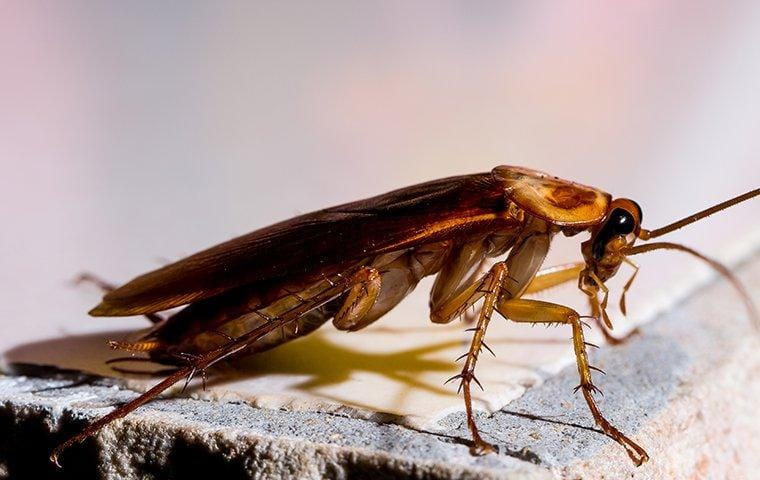 a cockroach crawling on a table in a home
